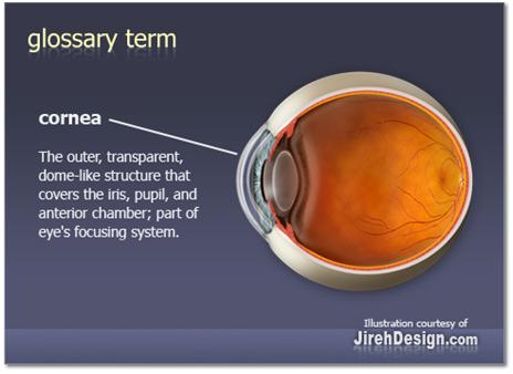 what-is-cornea